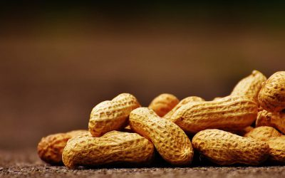 Por qué un empresario pierde si paga sólo con cacahuetes, y el trabajador también si acepta su condición de mono